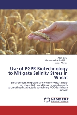 Use of PGPR Biotechnology to Mitigate Salinity Stress in Wheat - Ditta, Allah / Arshad (T. I. ), Muhammad / Ahmed, Wazir